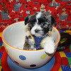 DAISY PUPPIES Photo and Video Galleries : 111 galleries with 1672 photos