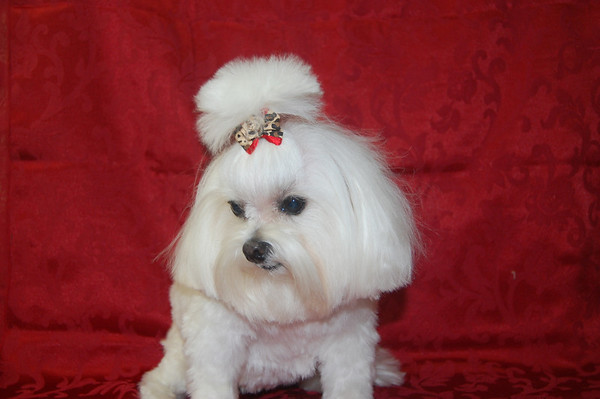 Dog Grooming Hair Styles