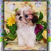 SELECT, CELEBRITY &amp; SPECIALTY PETS : 2 galleries with 16 photos